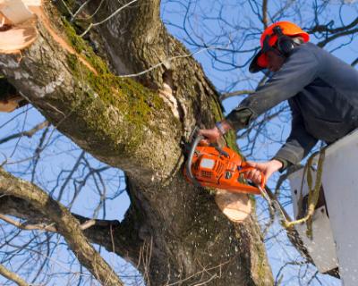 Tree Removal in Wilmington DE 2