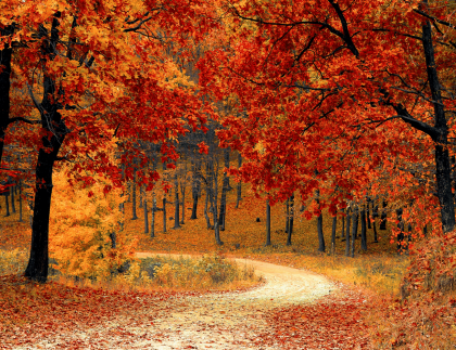 red and yellow tree leaves falling onto a dirt path